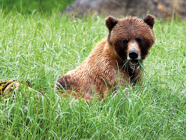 Khutzeymateen Valley Grizzly Tour